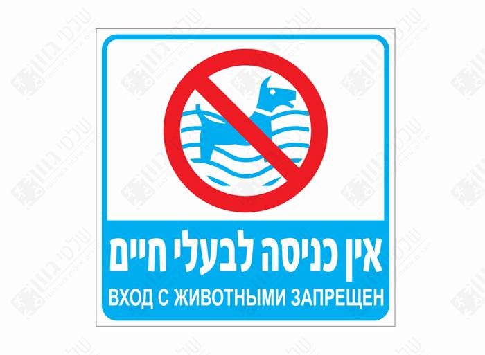 אין כניסה לבעלי חיים לבריכה